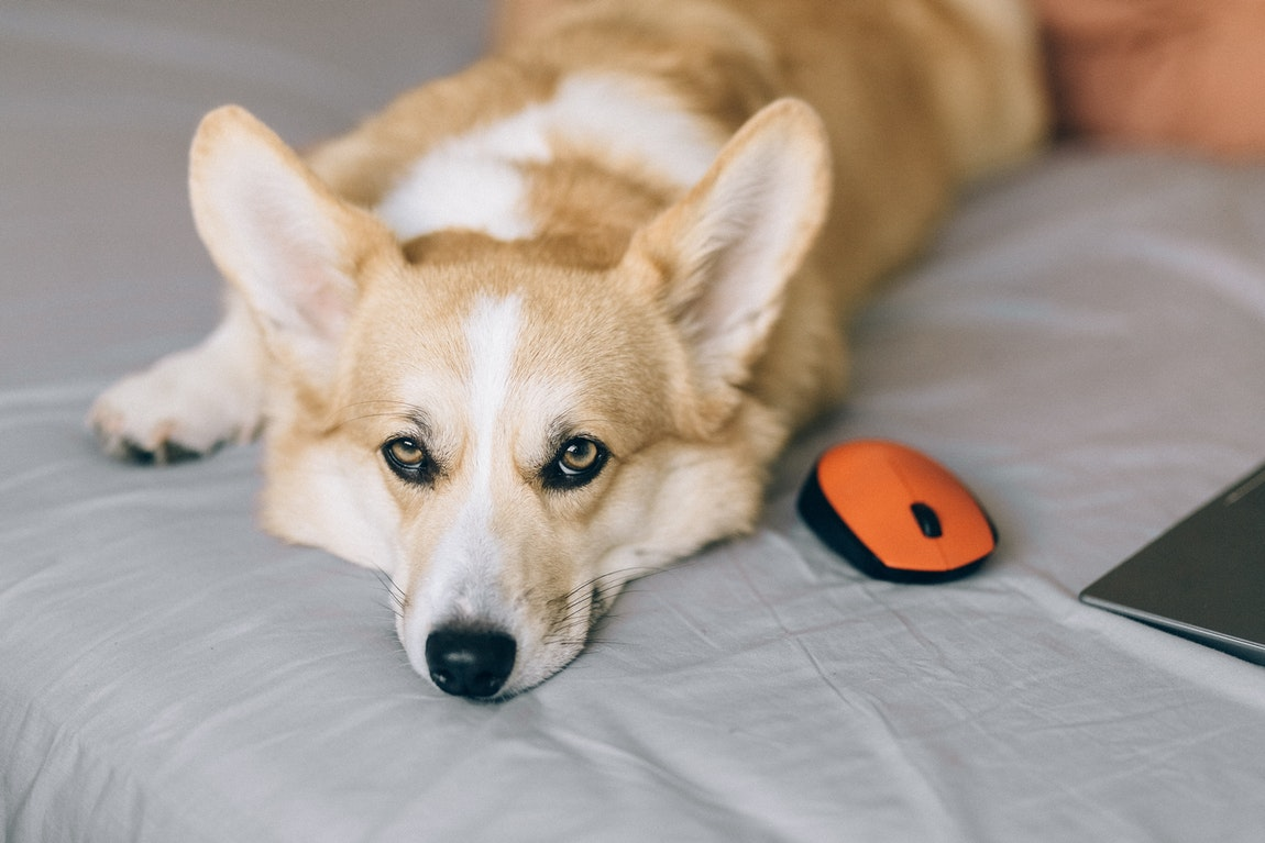 Choosing a New Bed for Your Lovely Dog – Basics to Consider Before Deciding