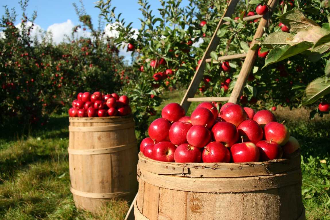 How to Make Your Orchard More Productive